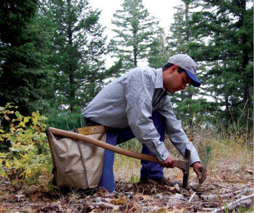 A Sierra Pacific registered professional forester plants a seedling
